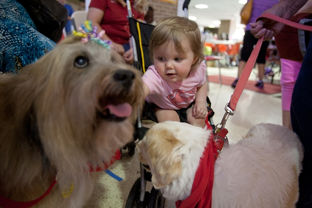 Pet therapy dogs help children after disasters